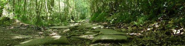 Le forêt enchantée - Les pierres qui chuchotent sur le chemin