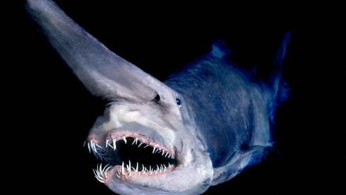 monstres marins poissons abysse océan
