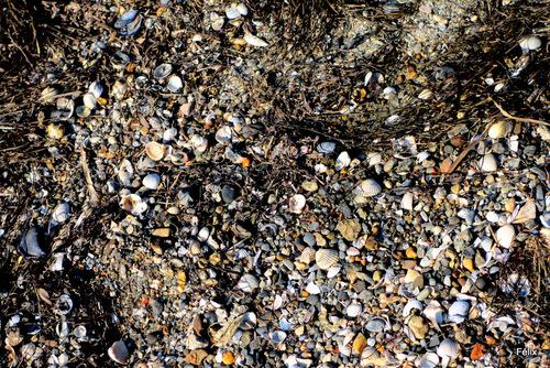 Des rochers, des moules et des algues ...