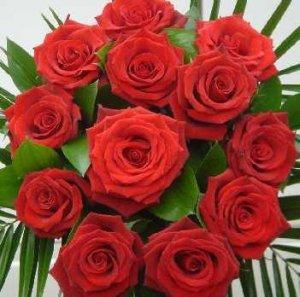 9918_roses.jpg