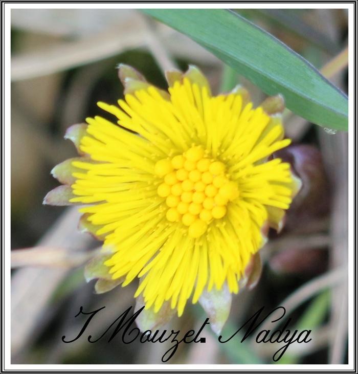 Fleurs à identifier