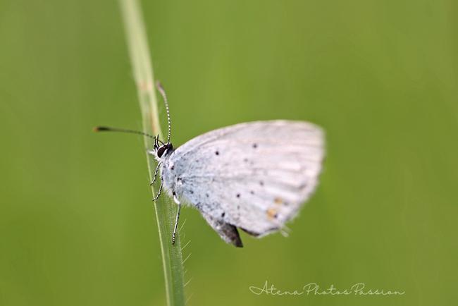 Papillons en vrac............