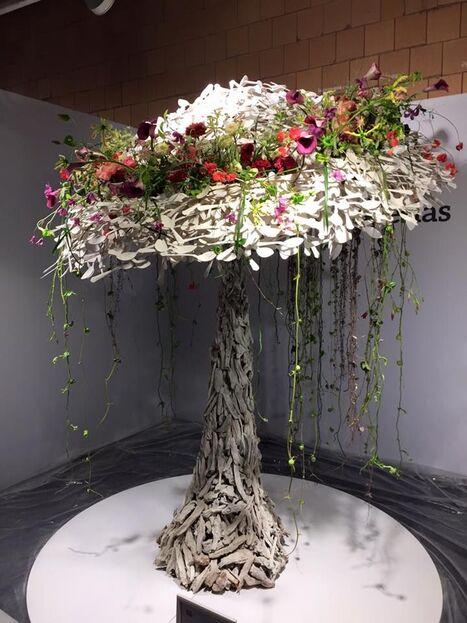 Résultat d'images pour berlin fleurs wors cup