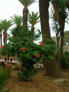 algeri-nov2006-027.JPG