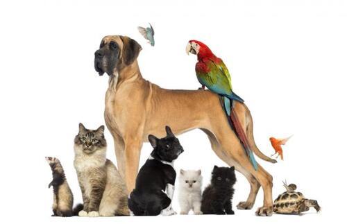 Aveu N°176 : J'avoue, j'aime les animaux mais pas chez moi !