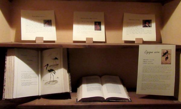 Présentation de documents patrimoniaux sur la faune et la flore à  la Bibliothèque Municipale de Châtillon sur Seine lors des Journées du Patrimoine