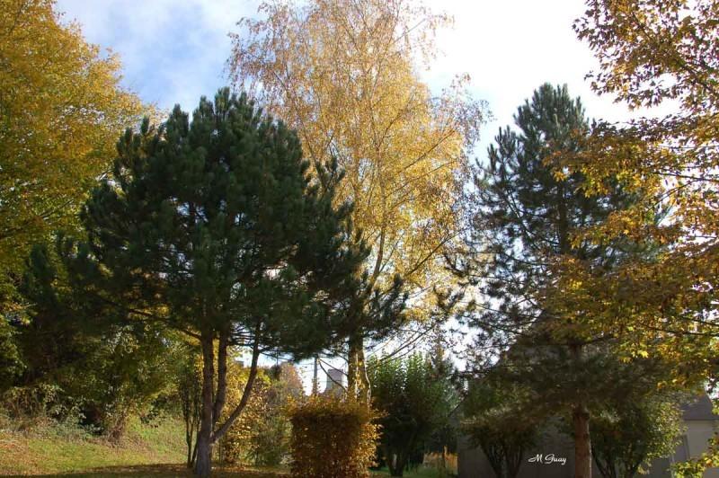 automne-terrain-6228.jpg