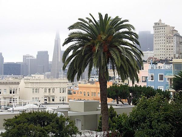 San Francisco Vue de Russian Hill 1