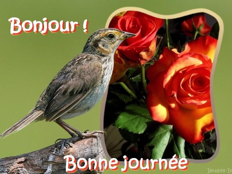 http://images-in.i.m.pic.centerblog.net/oiseau.jpg