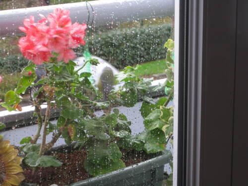 Sous la pluie battante,