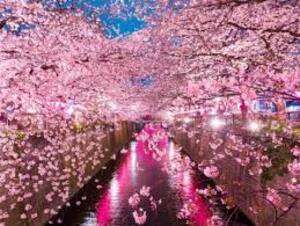 books japan blossoms city blossoms
