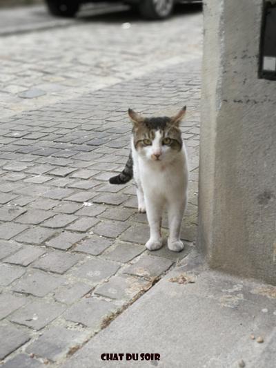chat du soir
