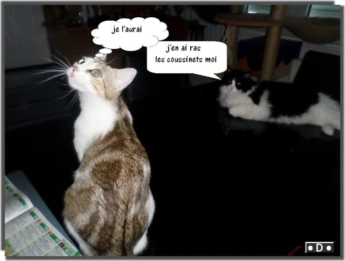 Jaya et la mouche ....