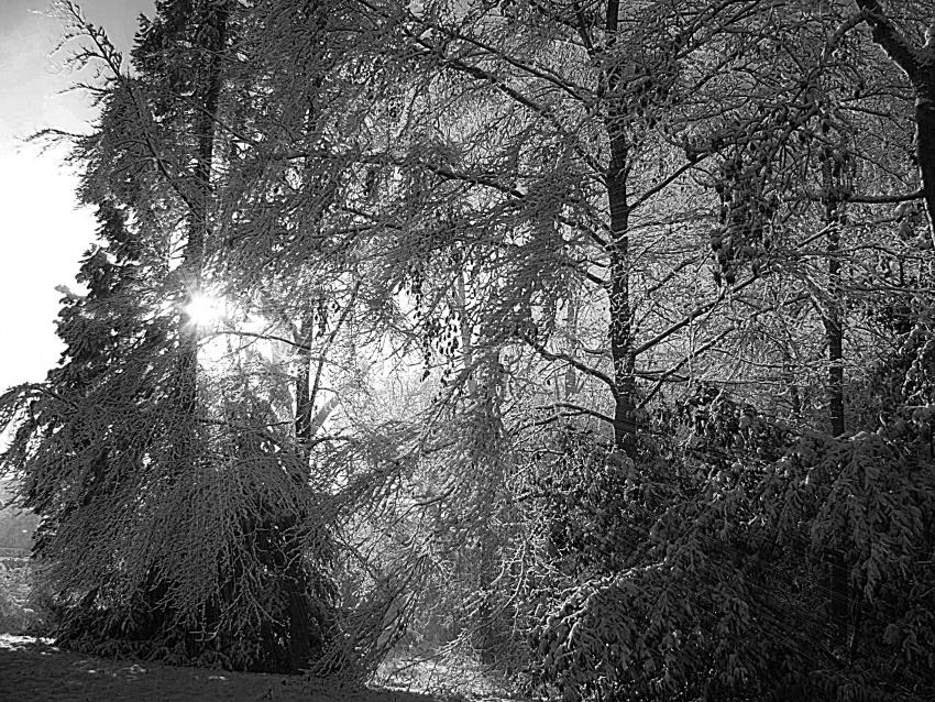une autre vision de l'hiver