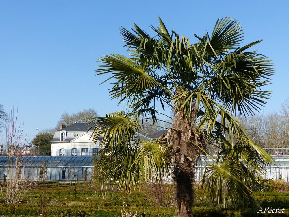 Le Jardin des Plantes en février