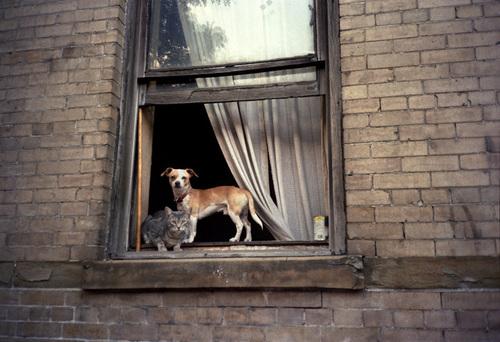 05 - Des chats à la fenêtre, en couleurs