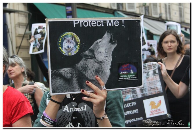 Manifestation du 3 Juin 2017 à Paris .... contre les tirs sur les loups et la chasse