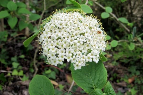 c6 - Petites fleurs blanches