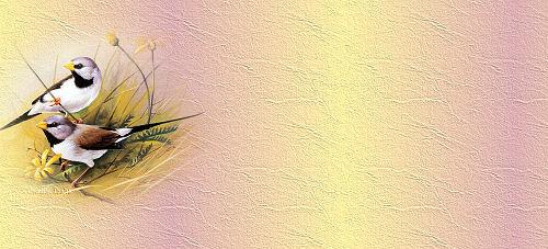 Papiers incrédimail Oiseaux 3