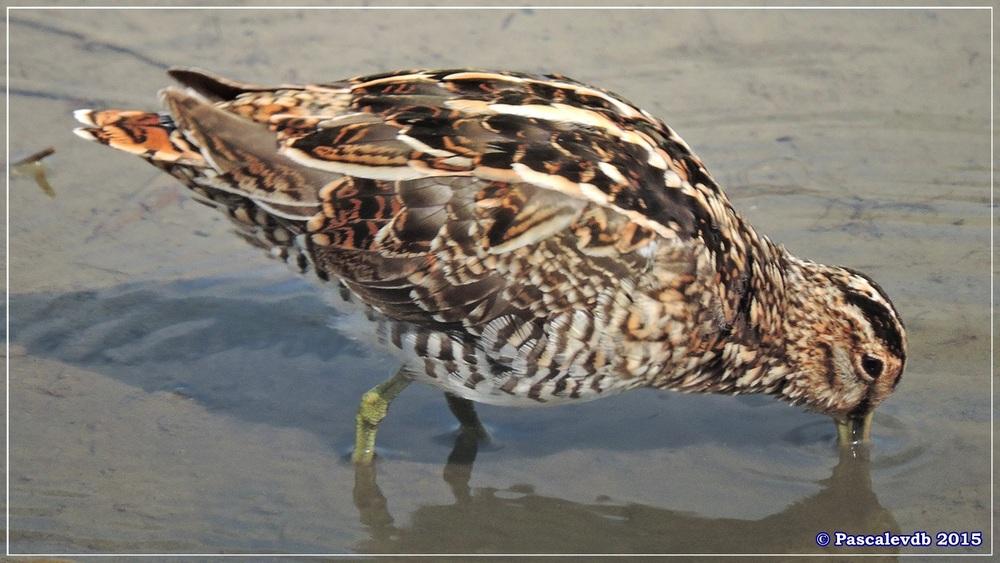 Réserve ornithologique du Teich (mars 2015) -3/8