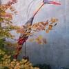 oiseau georges bellut 44