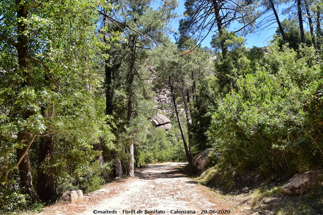 Forêt de Bonifatu - Corse