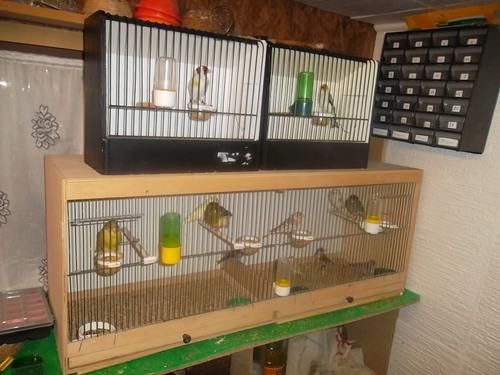 mes oiseaux pour 2015