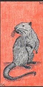39 - le rat