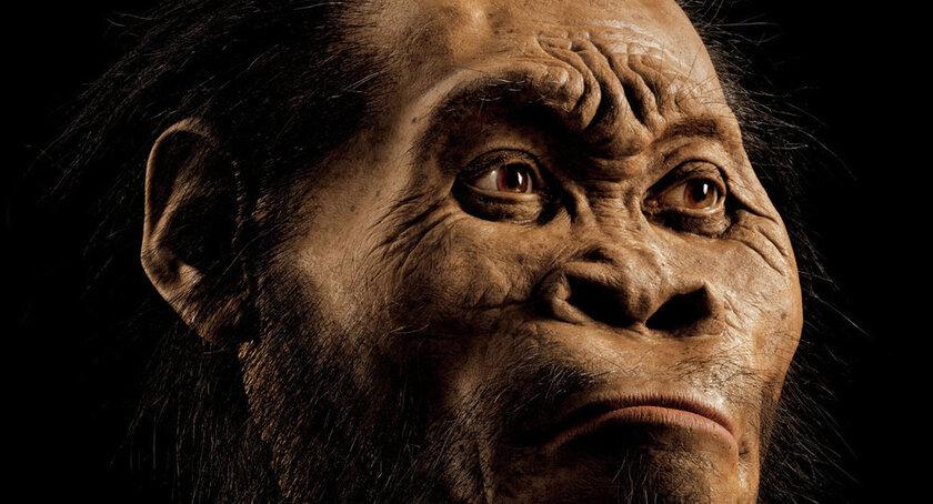 Les dents de 9,7 M d'années découvertes en Allemagne pourraient révolutionner l'Histoire
