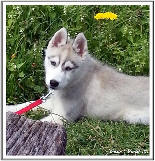 Jaya (3,5 mois)