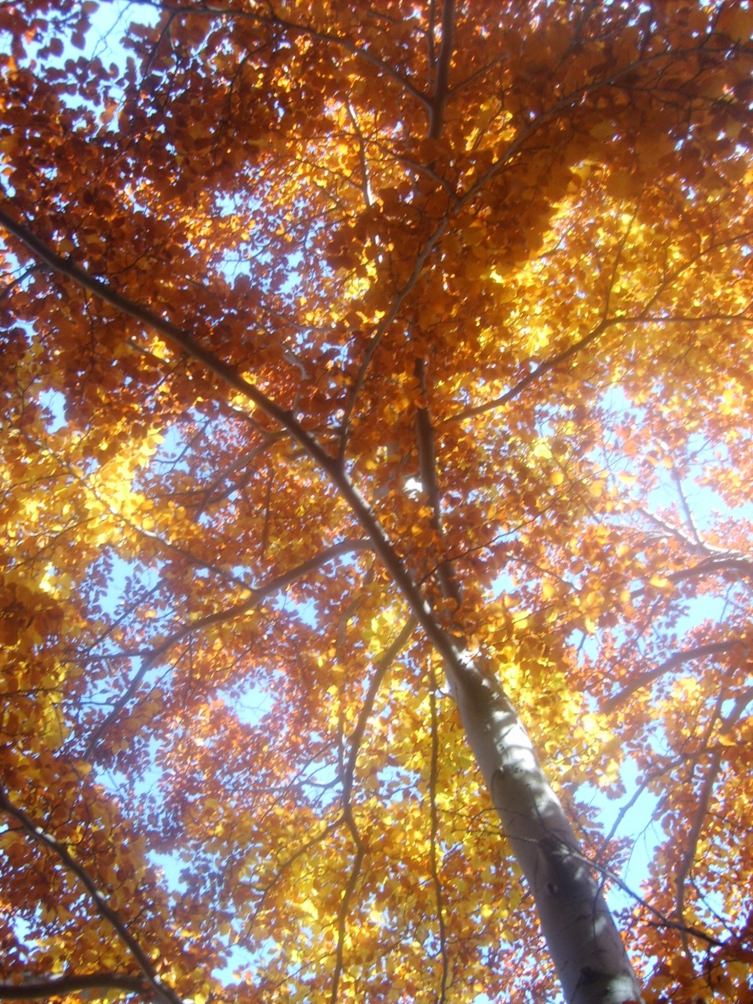 Randonn e etangs de bassi s l 39 automne et ses couleurs randonn es e - L automne et ses couleurs ...