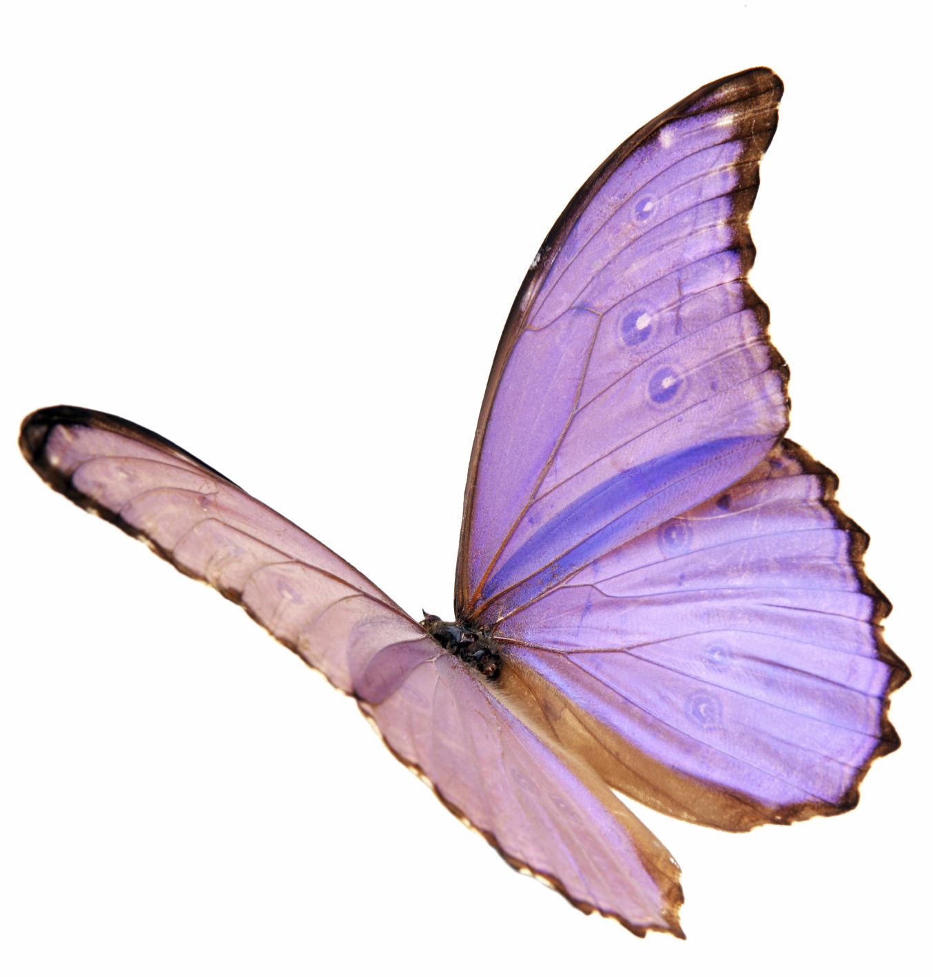 La leçon du papillon* - Islam Hadith Sunna: www.islamhadithsunna.com/la-lecon-du-papillon-a67874019