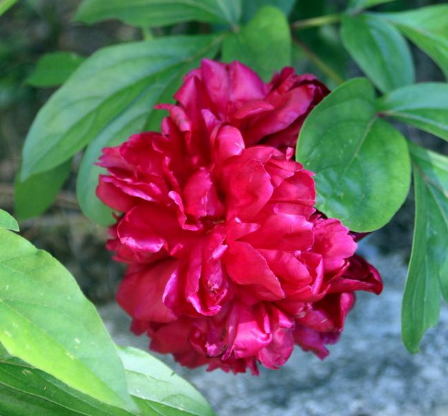 juin bien fleuri