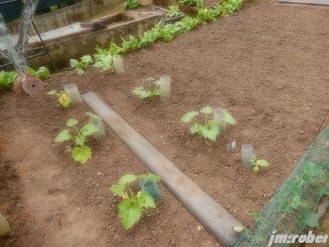 Un petit tour du potager après la pluie de la veille