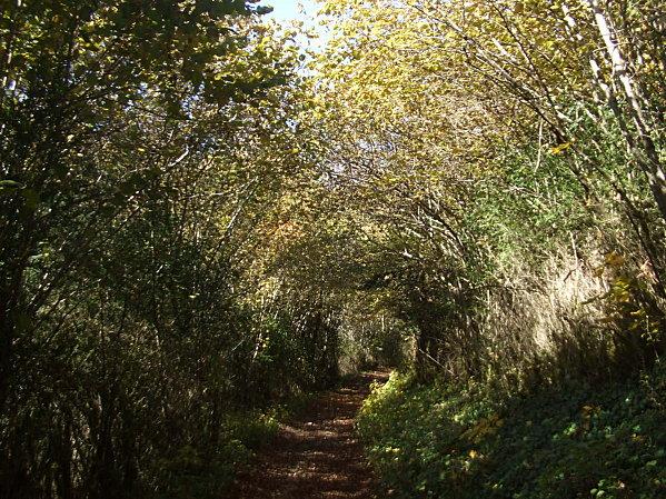 Forêt d'Arbignieu
