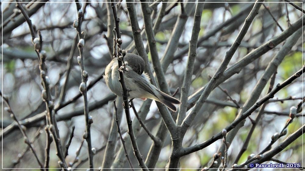 Réserve ornithologique du Teich -1/8