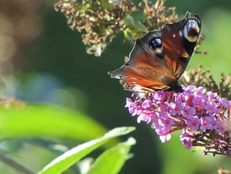 les-papillons-6422.JPG