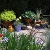 Jardin-en-pots