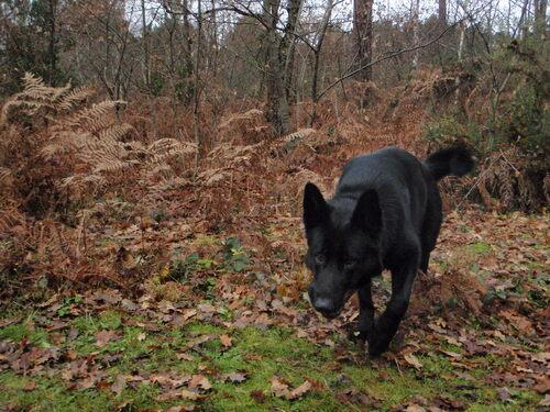 H'Elwood... canis lupus à l'extérieur, agneau à l'intérieur...
