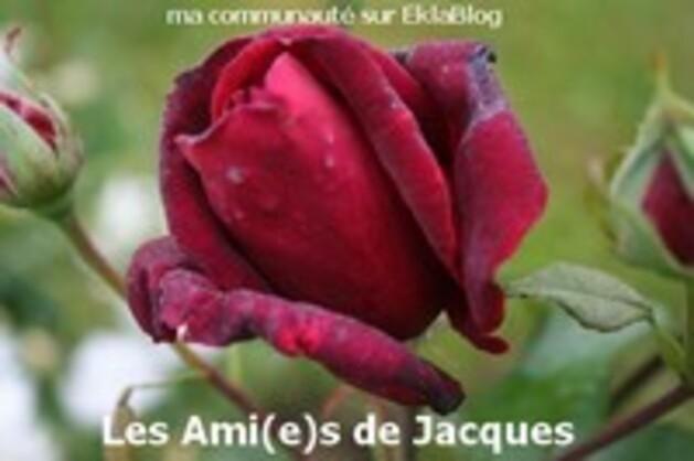Pour toi mon ami Jacques