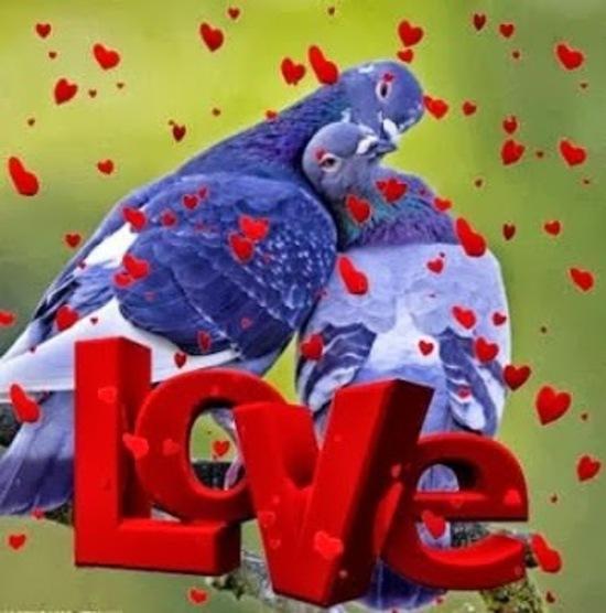 5 Gifs et Images d'amour