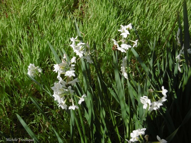 Une balade fleurie dans mon village, le 14 février...