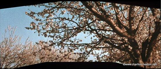 2 - SOLEIL VERT (1973) les larmes de Thorn
