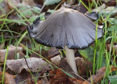 champignons automne10