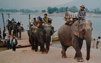 laos_elephant