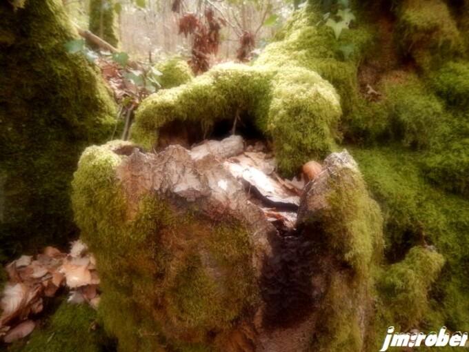 Nature: Promenons nous dans le bois.......