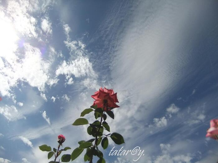 Grand soleil... 1)