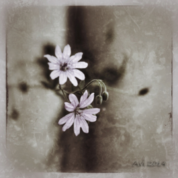 Encore quelques fleurs dans les vieux murs