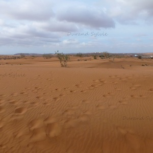 Balade en Dromadaire - Desert marocain