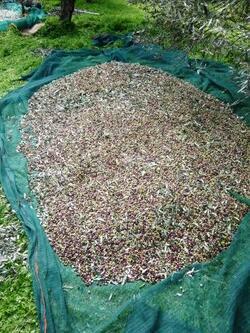 tas d'olives